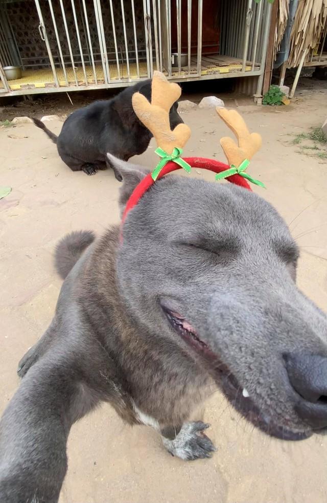 Nguyễn Văn Dúi từng là chú chó nổi tiếng được cả CĐM quốc tế quan tâm Photo-1-1608887633547685994577