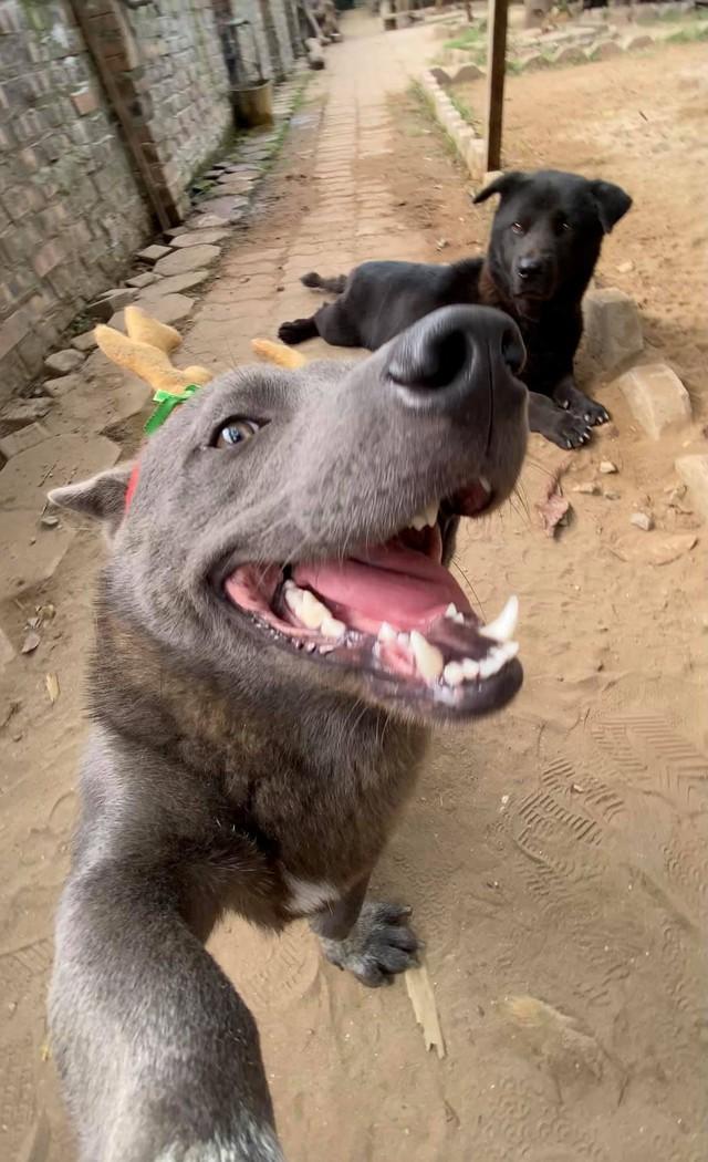 Nguyễn Văn Dúi từng là chú chó nổi tiếng được cả CĐM quốc tế quan tâm Photo-1-16088876699901773734854