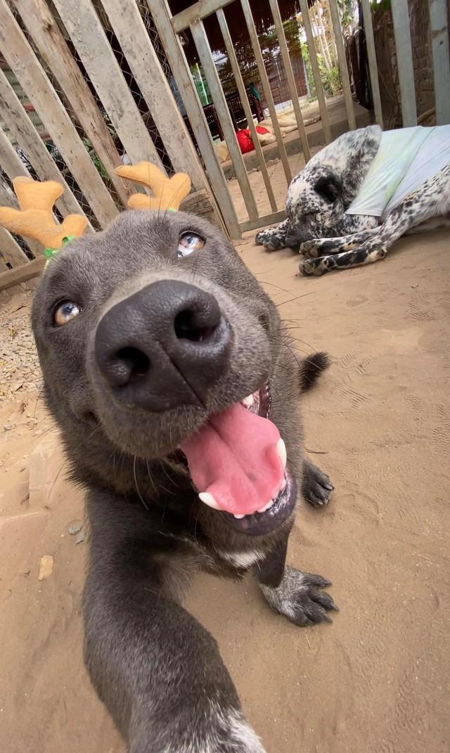 Nguyễn Văn Dúi từng là chú chó nổi tiếng được cả CĐM quốc tế quan tâm Photo-1-1608887732590809044497
