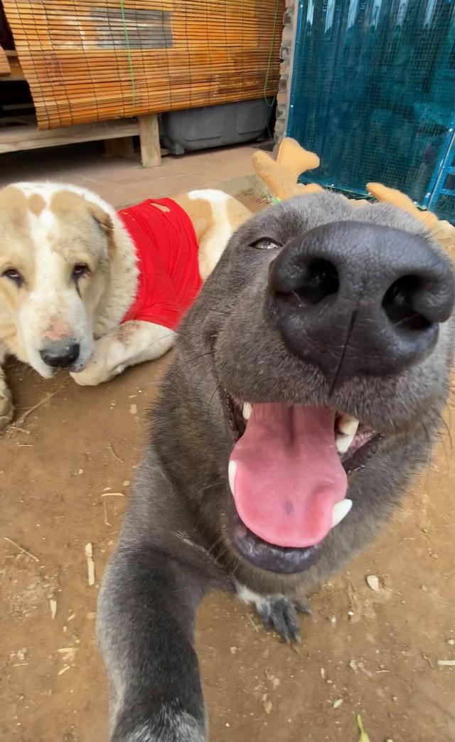 Nguyễn Văn Dúi từng là chú chó nổi tiếng được cả CĐM quốc tế quan tâm Photo-1-1608887745079643081525