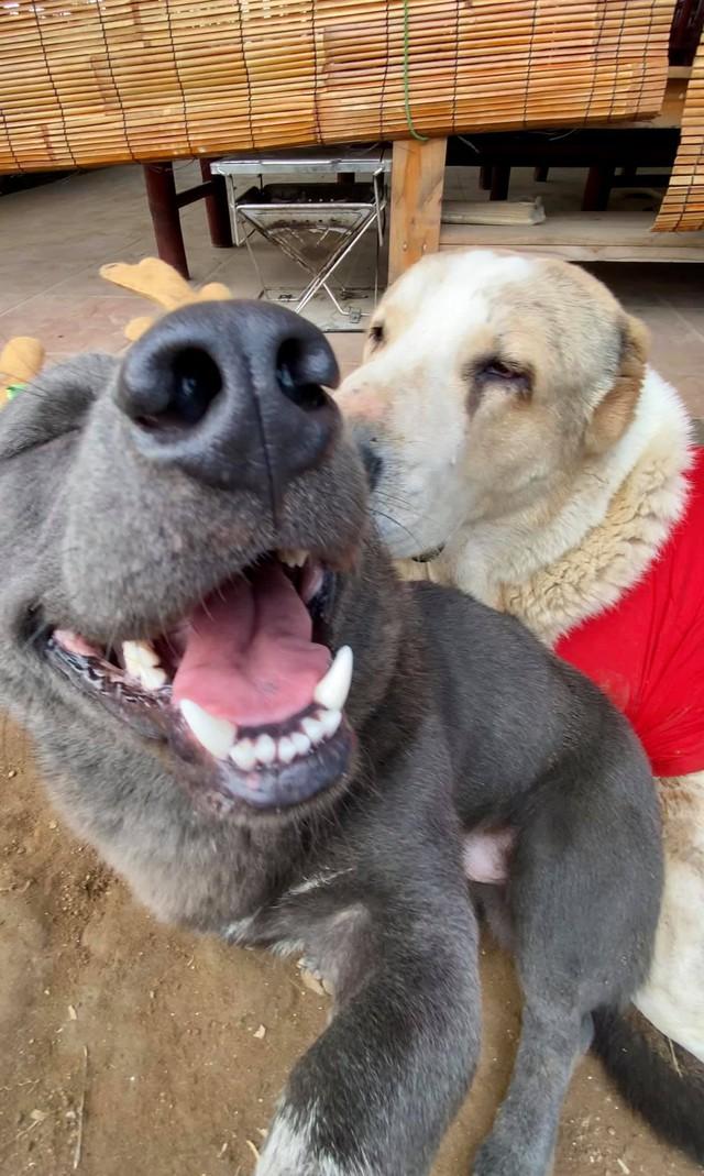 Nguyễn Văn Dúi từng là chú chó nổi tiếng được cả CĐM quốc tế quan tâm Photo-1-1608887767051930779815