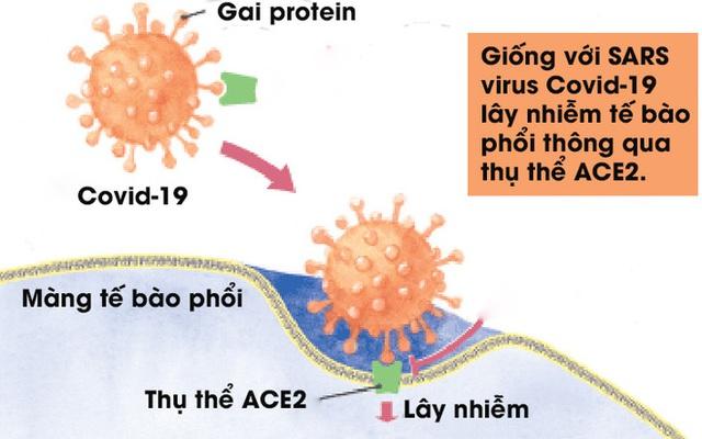[Infographic] Đây là cách virus Covid-19 tàn phá cơ thể người - Ảnh 3.