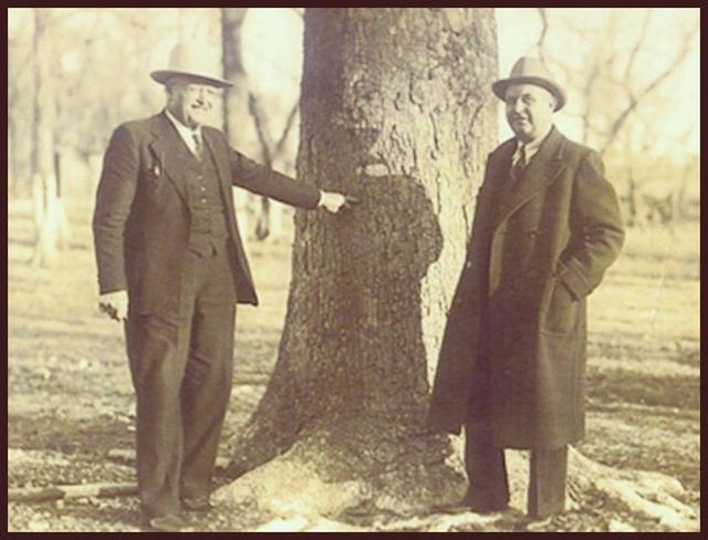 Chuyện về viên đạn kiên nhẫn suốt 20 năm trong thân cây, cuối cùng cũng thực hiện được sứ mệnh ám sát - Ảnh 2.