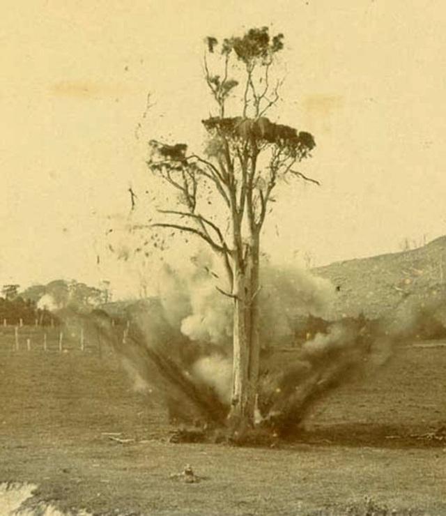 Chuyện về viên đạn kiên nhẫn suốt 20 năm trong thân cây, cuối cùng cũng thực hiện được sứ mệnh ám sát - Ảnh 4.