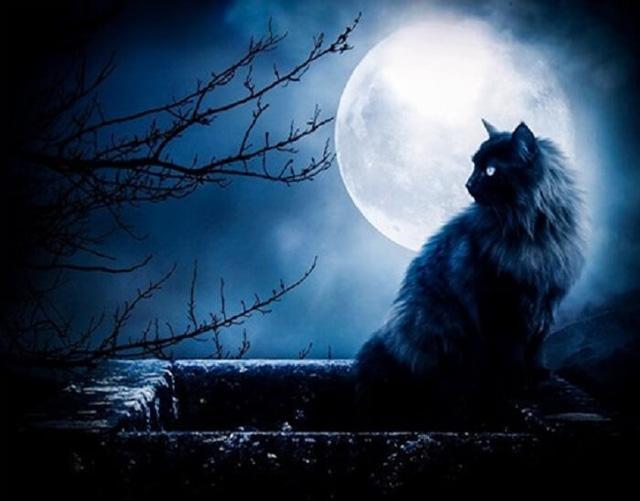 Các truyền thuyết kỳ quái về mèo đen - Ảnh 2.
