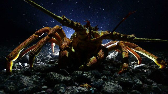 7 loài sinh vật bất tử, sở hữu skill cải lão hoàn đồng đang tồn tại trên Trái Đất - Ảnh 2.