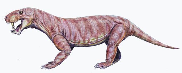 Top 10 sinh vật siêu khổng lồ thời tiền sử dễ bị nhầm thành khủng long - Ảnh 9.