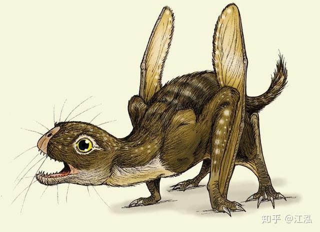 Luôn treo mình lộn ngược trên cây như loài dơi, đây nhất định là loài thằn lằn bay cổ đại kỳ lạ nhất từng tồn tại ở Trung Quốc Photo-10-15836868297042140008451
