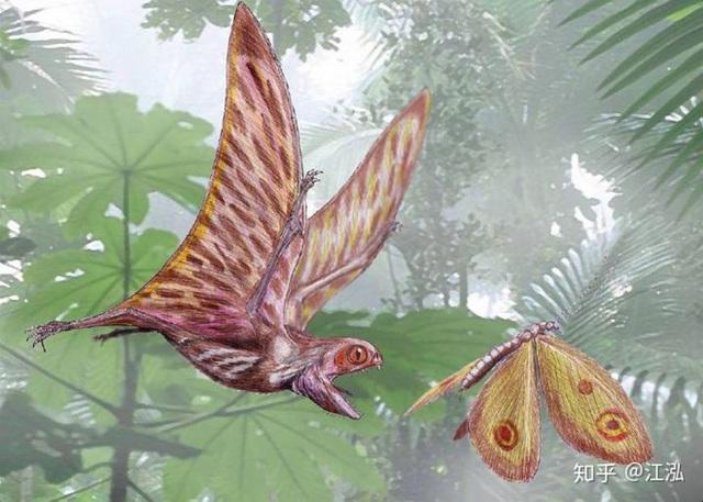 Luôn treo mình lộn ngược trên cây như loài dơi, đây nhất định là loài thằn lằn bay cổ đại kỳ lạ nhất từng tồn tại ở Trung Quốc Photo-11-1583686830114366349867