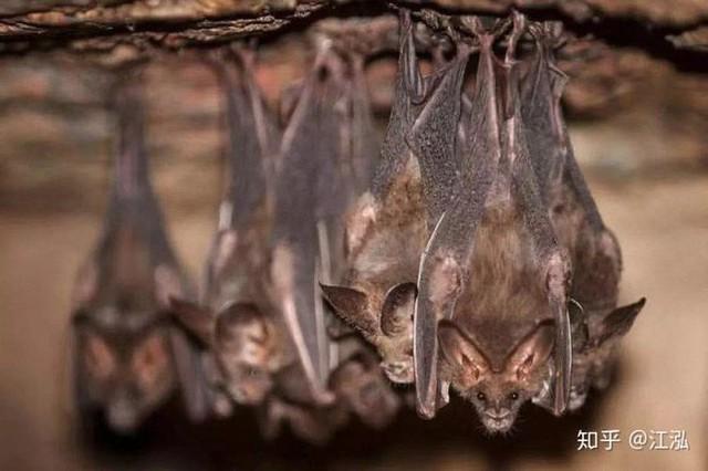 Luôn treo mình lộn ngược trên cây như loài dơi, đây nhất định là loài thằn lằn bay cổ đại kỳ lạ nhất từng tồn tại ở Trung Quốc Photo-6-1583686829626906814036