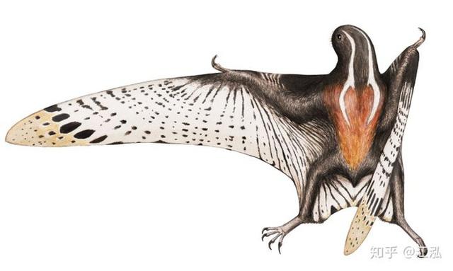 Luôn treo mình lộn ngược trên cây như loài dơi, đây nhất định là loài thằn lằn bay cổ đại kỳ lạ nhất từng tồn tại ở Trung Quốc Photo-7-1583686830281264173824