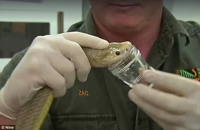 Top 6 loài rắn bạn cần phải tránh nếu không muốn thăng thiên (P. 2) - Ảnh 2.