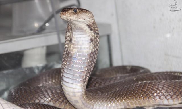 Top 6 loài rắn bạn cần phải tránh nếu không muốn thăng thiên (P. 2) - Ảnh 6.
