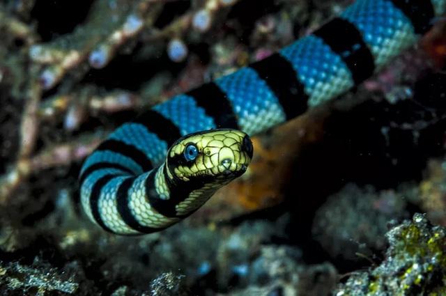 Top 5 điều thú vị về loài rắn, điều cuối sẽ khiến bất cứ ai cũng bị ám ảnh - Ảnh 2.