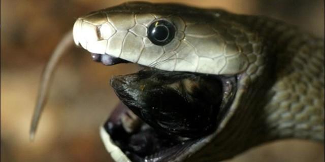 Top 5 điều thú vị về loài rắn, điều cuối sẽ khiến bất cứ ai cũng bị ám ảnh - Ảnh 3.