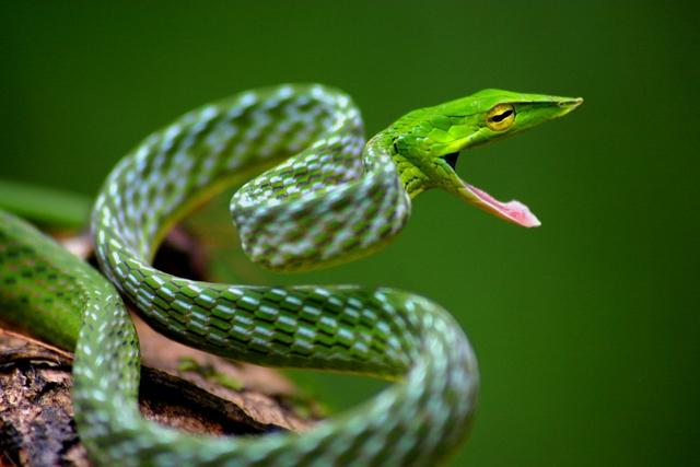 Top 5 điều thú vị về loài rắn, điều cuối sẽ khiến bất cứ ai cũng bị ám ảnh - Ảnh 1.