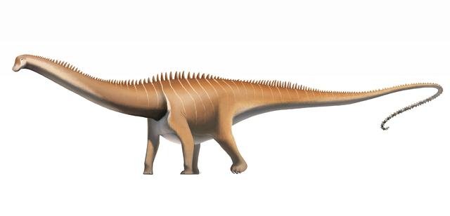 Top 5 điều kỳ thú về khủng long, điều cuối sẽ khiến bạn bất ngờ đấy - Ảnh 4.