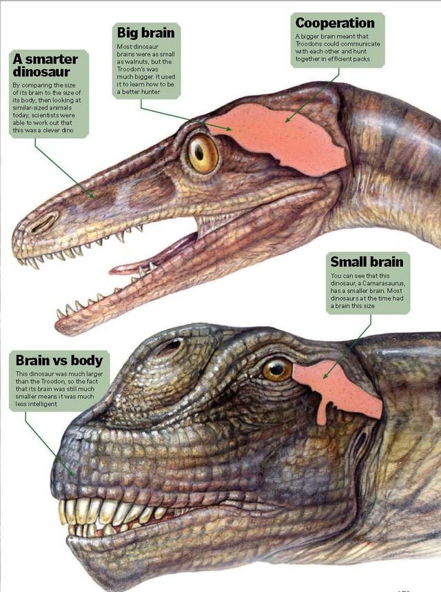 Top 5 điều kỳ thú về khủng long, điều cuối sẽ khiến bạn bất ngờ đấy - Ảnh 2.