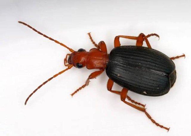 Ngũ độc trong tự nhiên: Những sinh vật chứa nọc độc nguy hiểm nhất hành tinh - Ảnh 1.