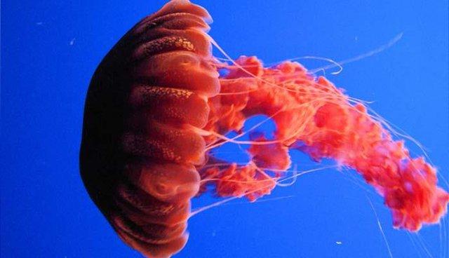 Ngũ độc trong tự nhiên: Những sinh vật chứa nọc độc nguy hiểm nhất hành tinh - Ảnh 2.