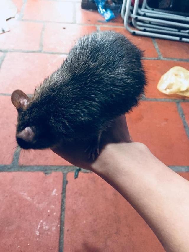 Nuôi chó, mèo thường quá, cô nàng nổi hứng xin chuột cống về chăm, tới giờ có em boss cực tình cảm và thông minh - Ảnh 3.