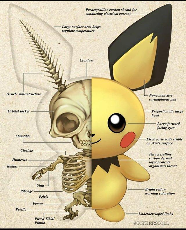 Bộ tranh giải phẫu Pokemon độc nhất vô nhị khiến các fan ruột trầm trồ vì quá đỉnh - Ảnh 5.