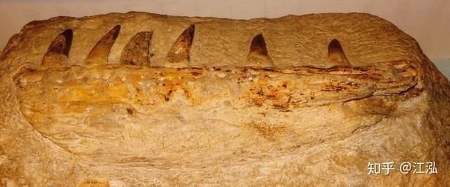 Cá sấu tiền sử dưới đại dương chỉ cần một cú đớp cũng có thể làm thủng bụng ngư long - Ảnh 3.