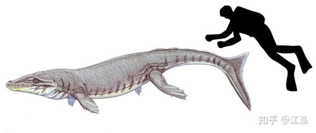 Cá sấu tiền sử dưới đại dương chỉ cần một cú đớp cũng có thể làm thủng bụng ngư long - Ảnh 7.