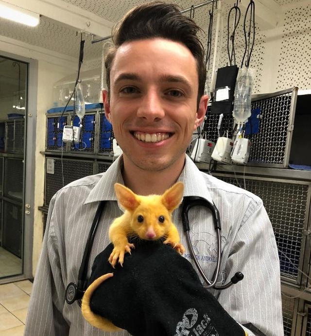 Phòng khám Úc giải cứu thành công Pikachu đời thực - Ảnh 4.