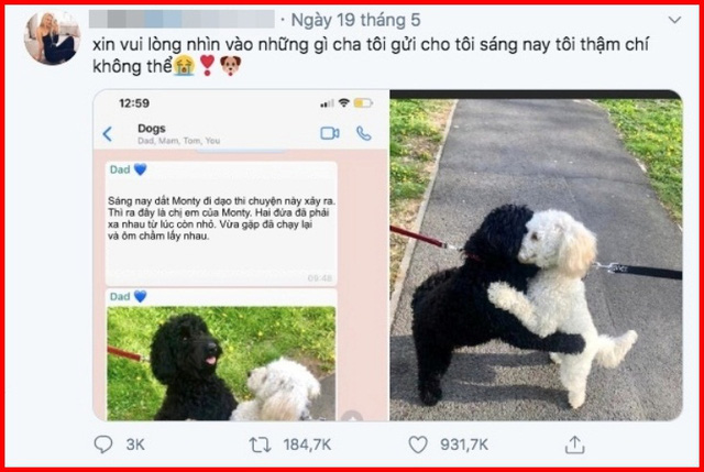 Hai chú poodle ôm chầm lấy nhau khi chạm mặt, dân mạng cảm động khi biết quan hệ của chúng - Ảnh 4.