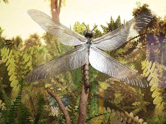Chuồn chuồn khổng lồ và những sự thật về thế giới tiền sử mà bạn nên biết - Ảnh 1.