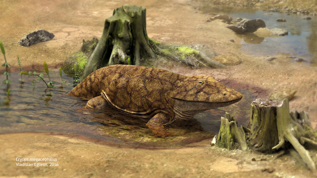 Chuồn chuồn khổng lồ và những sự thật về thế giới tiền sử mà bạn nên biết - Ảnh 6.
