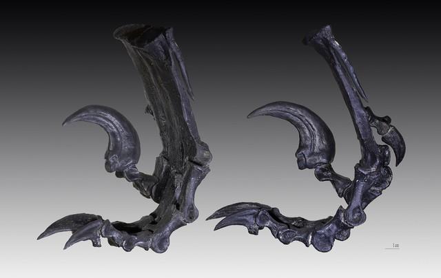 Tìm hiểu về Deinonychus: Loài khủng long sở hữu cú đá chết người - Ảnh 3.