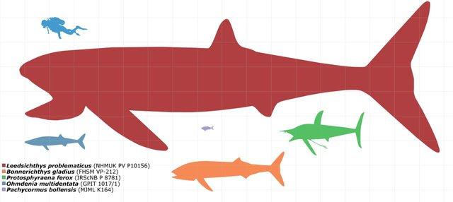 Những thủy quái đại dương dữ dằn nhất lịch sử tiến hóa, siêu cá mập gặp cũng tắt điện - Ảnh 1.