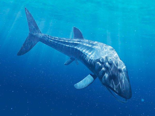 Những thủy quái đại dương dữ dằn nhất lịch sử tiến hóa, siêu cá mập gặp cũng tắt điện - Ảnh 2.