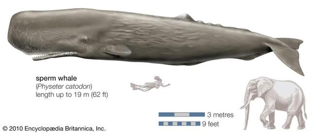 Những thủy quái đại dương dữ dằn nhất lịch sử tiến hóa, siêu cá mập gặp cũng tắt điện - Ảnh 4.