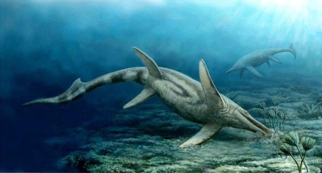Những thủy quái đại dương dữ dằn nhất lịch sử tiến hóa, siêu cá mập gặp cũng tắt điện - Ảnh 6.