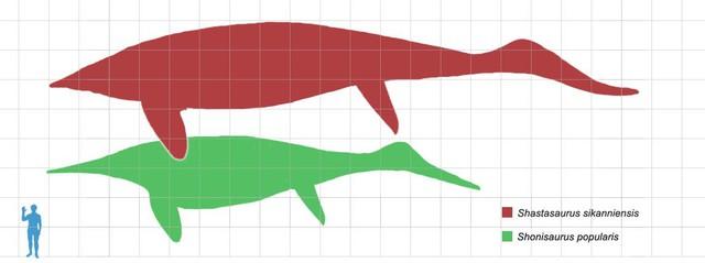 Những thủy quái đại dương dữ dằn nhất lịch sử tiến hóa, siêu cá mập gặp cũng tắt điện - Ảnh 7.