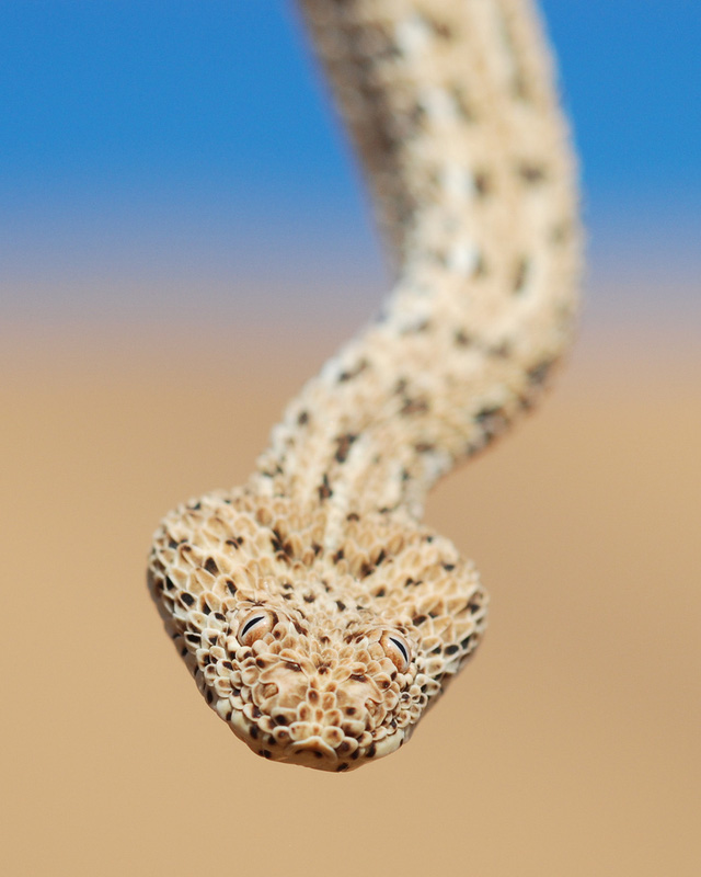 Top 5 sự thật mà chúng ta thường xuyên hiểu nhầm về rắn - Ảnh 2.