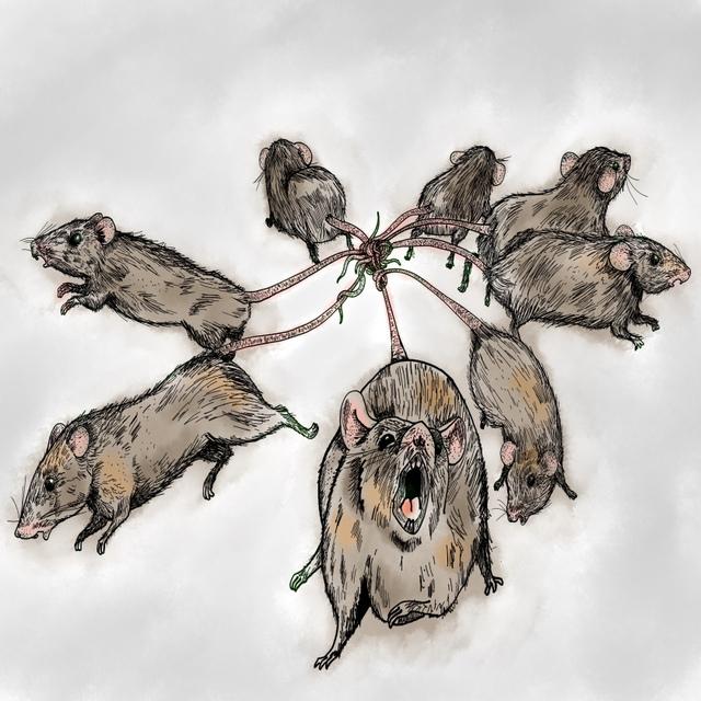 Top 5 sự thật kinh dị về loài chuột, bạn đã biết được bao nhiêu? - Ảnh 5.