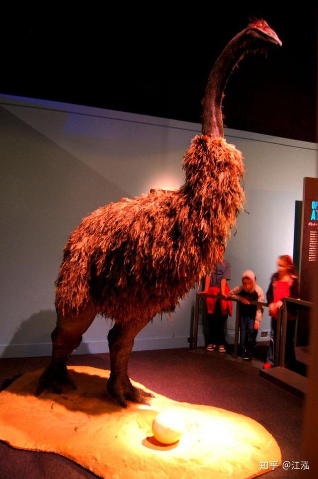 Madagascar phát hiện ra loài chim khổng lồ đầu tiên trong lịch sử có độ cao lên tới 3 mét - Ảnh 1.