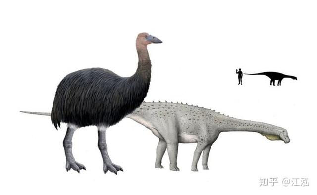 Madagascar phát hiện ra loài chim khổng lồ đầu tiên trong lịch sử có độ cao lên tới 3 mét - Ảnh 7.
