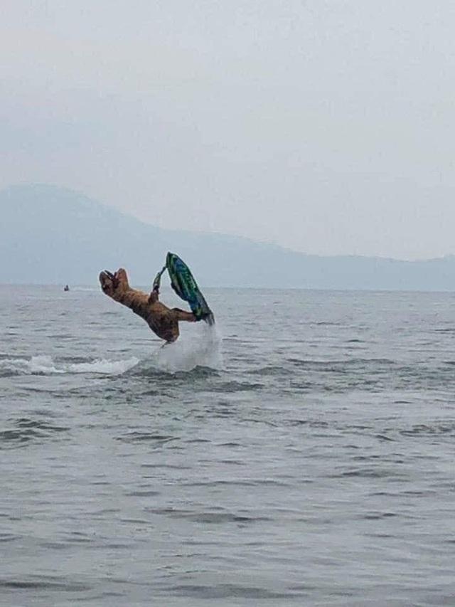 Cosplay khủng long bạo chúa đi chơi lướt sóng, nam thanh niên khiến cộng đồng mạng không khỏi ngỡ ngàng - Ảnh 3.