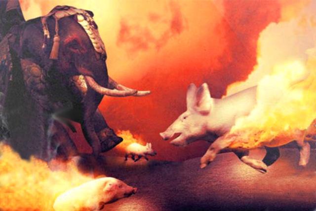 Người La Mã từng dùng lợn lửa để chiến đấu? - Ảnh 6.