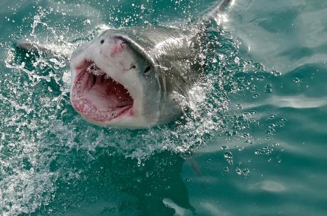 Top 4 điều thú vị về cá mập, bạn đã biết chưa? - Ảnh 5.