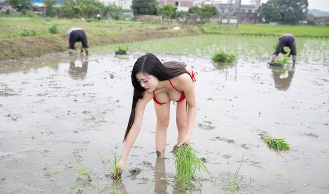 Mặc bikini đi trồng lúa, bón phân, cô nàng hot girl nhận muôn vàn chỉ trích từ phía cộng đồng mạng - Ảnh 3.