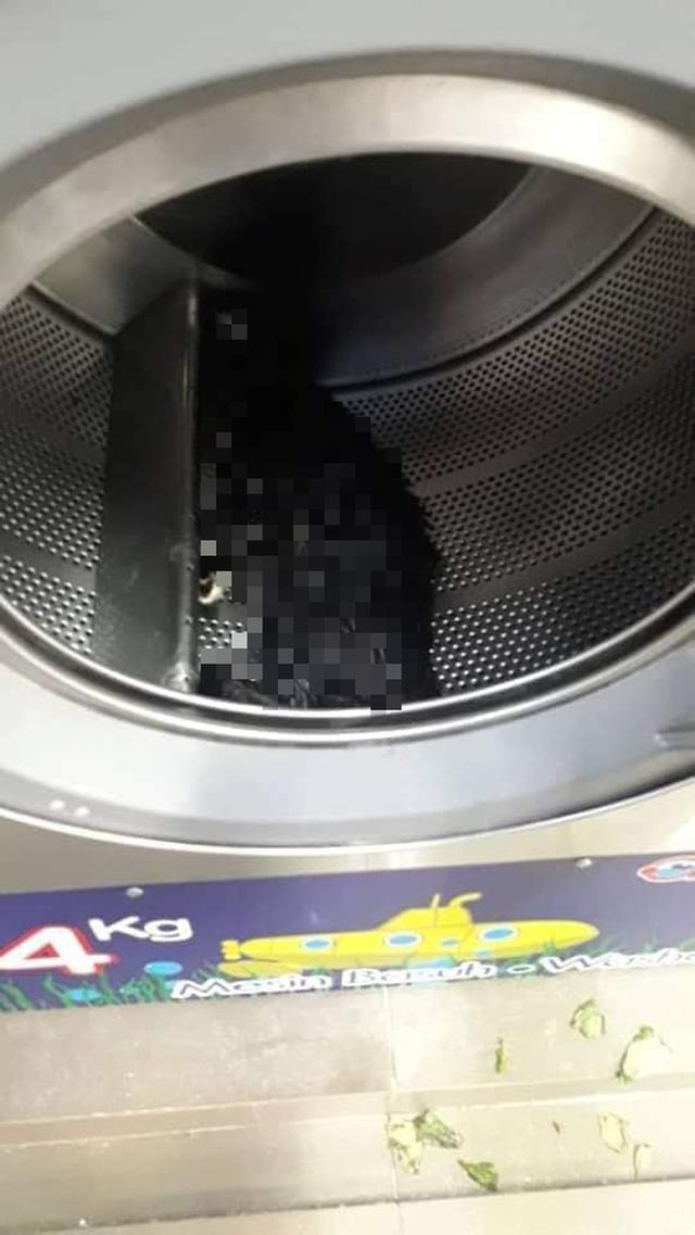 Phát hiện xác 3 con mèo trong máy giặt công cộng, camera soi ra hành động vô nhân đạo của gã đàn ông và cái giá phải trả thích đáng - Ảnh 2.