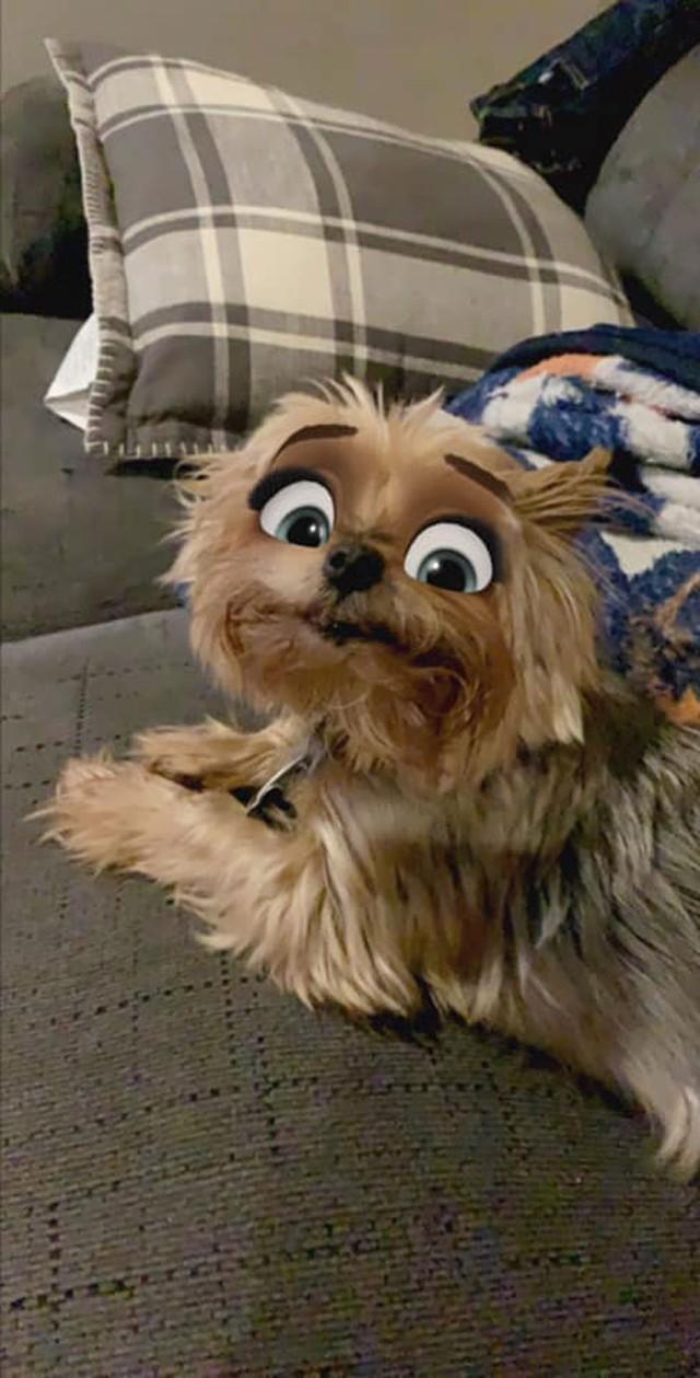 Dàn cún cưng biến thân thành nhân vật Disney cực đáng yêu nhờ hiệu ứng từ Snapchat - Ảnh 3.