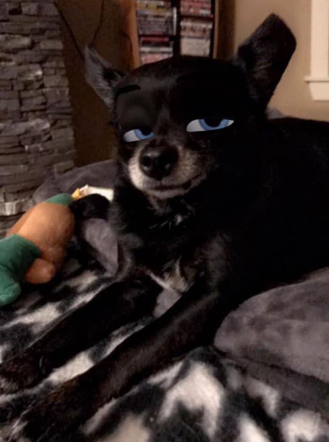 Dàn cún cưng biến thân thành nhân vật Disney cực đáng yêu nhờ hiệu ứng từ Snapchat - Ảnh 4.