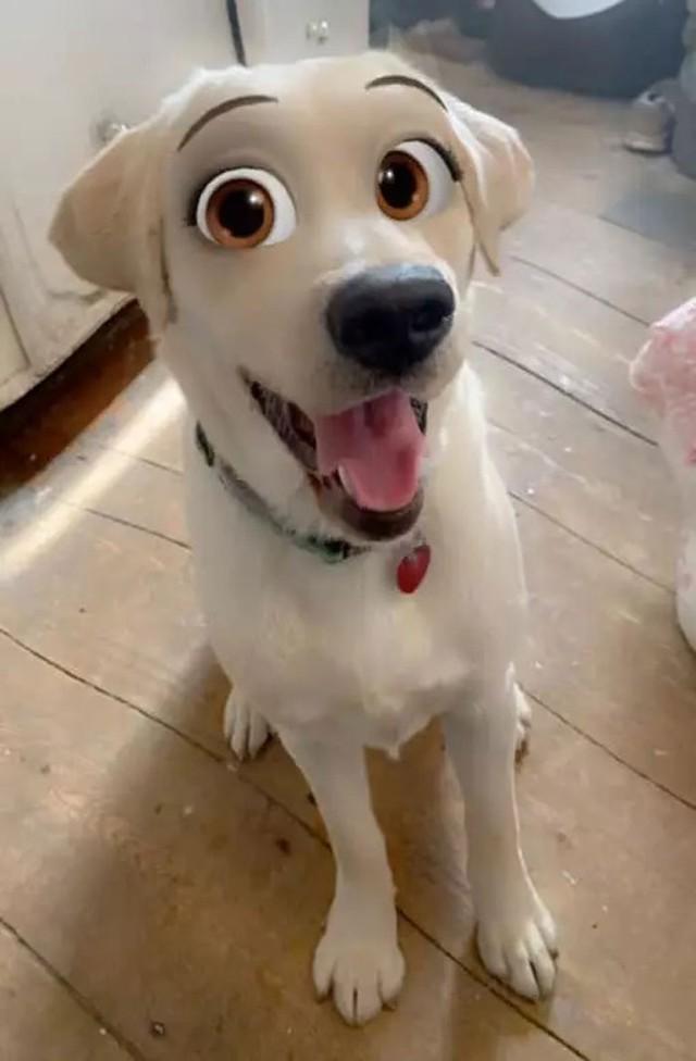 Dàn cún cưng biến thân thành nhân vật Disney cực đáng yêu nhờ hiệu ứng từ Snapchat - Ảnh 5.